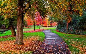Fall Leaf and Yard Cleanup - St. Catharines