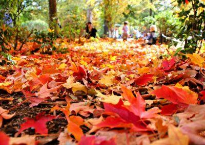 Fall Yard and Leaf Cleanup