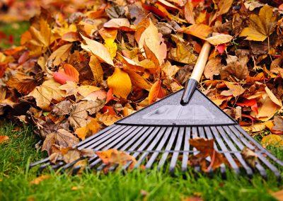 Fall Leaf and Yard Cleanup – St. Catharines